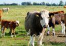 COVID-19 – maksymalna pomoc dla rolnika – 7000 euro