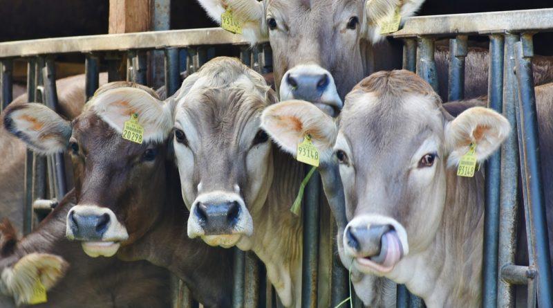 Jak się przygotować do kontroli gospodarstwa rolnego przez powiatowego lekarza weterynarii?