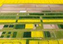Odmiany zbóż ozimych rekomendowane do uprawy w województwie kujawsko-pomorskim w 2021 roku
