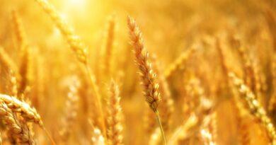 STOP przekroczeniom najwyższych dopuszczalnych poziomów pozostałości środków ochrony roślin w żywności