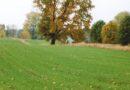 Czy zwalczanie chwastów w zbożach jesienią jest potrzebne?