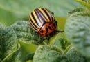 Pomóż opracować internetowy zestaw narzędzi do integrowanej ochrony roślin